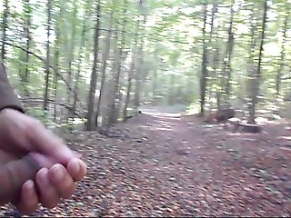 A Forest Walk in Autumn